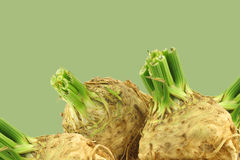 Fresh celery roots with some foliage Stock Image