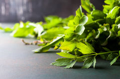 Fresh celery and sorrel. Fresh organic celery and sorrel leaves on dark table, selective focus Royalty Free Stock Photo