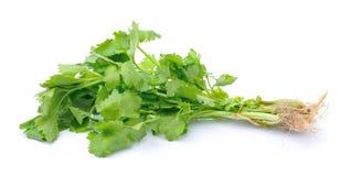 Fresh Celery on white background Royalty Free Stock Photo