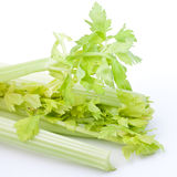 Fresh Celery Royalty Free Stock Image