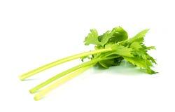 Fresh celery on white . Royalty Free Stock Image