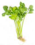 Fresh celery on white Royalty Free Stock Photo