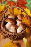 Fresh cep (porcini ) mushrooms in the basket Royalty Free Stock Photos