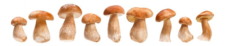 Fresh ceps, porcini mushrooms Royalty Free Stock Photography
