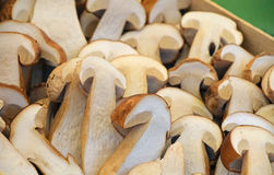 Fresh ceps porcini mushrooms halves close up. Fresh autumn season halved cut porcini mushrooms ceps, Boletus edulis in wooden box on retail farmers market, close stock photo