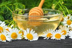 Fresh chamomile flowers and honey in a glass bowl. Alternative medicine concept on a black wooden table selective focus stock photos