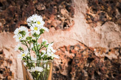 Fresh chamomile flowers on the red rock background Royalty Free Stock Images