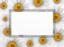Fresh Chamomile Flowers on Vertical White Frame Stock Photo