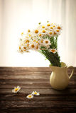Fresh chamomile flowers on the wooden table. Against the background of a window Stock Photo
