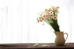 Fresh chamomile flowers on the wooden table. Bouquet of wildflowers on a rustic table at country cottage Stock Image