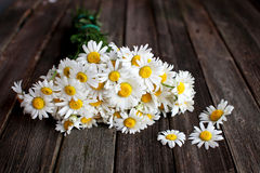 Fresh chamomile flowers on the wooden table. Bouquet of wildflowers on a rustic table at country cottage Stock Photos