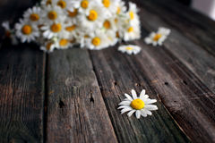 Fresh chamomile flowers on the wooden table. Bouquet of wildflowers on a rustic table at country cottage Royalty Free Stock Images