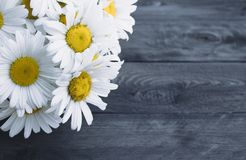 Fresh chamomile flowers on a wooden table royalty free stock photography
