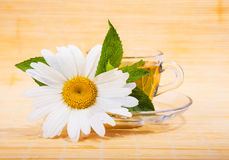 Fresh chamomile tea Royalty Free Stock Images