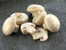 Fresh champignon. Food serie: fresh mushrooms isolated on solid background stock images