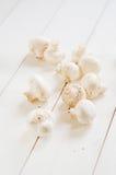Fresh champignon mushrooms Royalty Free Stock Photos