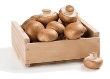 Fresh champignon mushrooms. Brown champignon mushroom in a wooden box  on white background Royalty Free Stock Image
