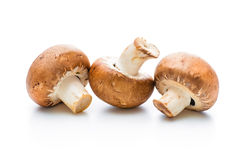 Fresh champignon mushrooms Stock Photography