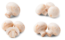 Fresh champignon mushrooms isolated on white background. Set or collection.  Royalty Free Stock Images