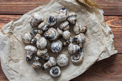 The fresh champignons Stock Photo