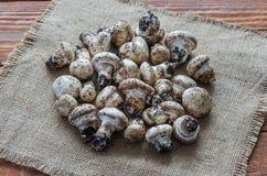 The fresh champignons Stock Images
