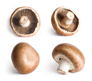 Fresh champignons isolated on white background. Royalty Free Stock Photos