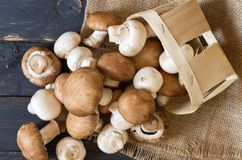 Fresh champignons mushrooms. View from above. Top view on mushrooms Royalty Free Stock Photography