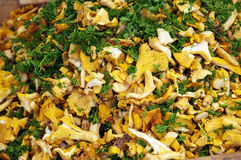 Fresh Chantarelles Royalty Free Stock Image