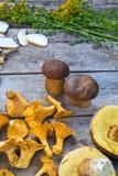 Fresh Chanterelle and Boletus Edilus mushrooms on a wooden table Stock Photography