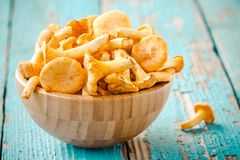 Fresh chanterelle mushrooms in a bowl on a wooden background Stock Images