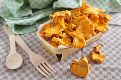 Fresh chanterelle mushrooms Royalty Free Stock Image