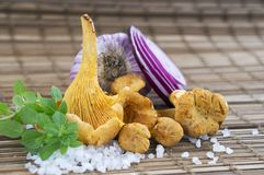 Fresh Chanterelle mushrooms, rock sea salt, rings of red onion and sweet basil on wooden surface. Harvest season. Chanterelle mushrooms, rock sea salt and sweet royalty free stock images
