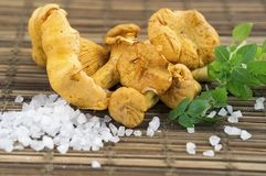 Fresh Chanterelle mushrooms, rock sea salt and sweet basil on wooden surface. Chanterelle mushrooms, rock sea salt and sweet basil on wooden surface royalty free stock images