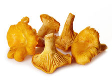 Fresh chanterelle mushrooms Stock Images