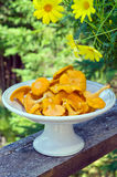 Fresh Chanterelle Mushrooms in White Bowl Royalty Free Stock Image