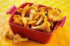 Fresh chanterelles. Fresh picked chanterelle mushrooms on red bowl on yellow table mat Stock Image