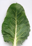 Fresh chard. Some really fresh big chard in green royalty free stock images