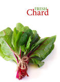 Fresh chard. Royalty Free Stock Photo