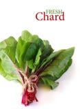 Fresh chard. Bundle of fresh kitchen garden chard on a white background Royalty Free Stock Photo