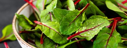 Fresh chard leaves on black background. Banner royalty free stock photo