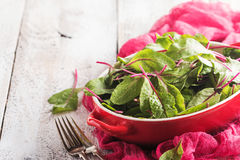 Fresh chard leaves Royalty Free Stock Photography
