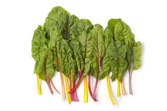 Fresh chard leaves in colors Stock Photography