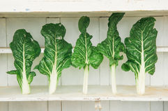 Fresh chard Royalty Free Stock Image