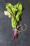 Fresh chard on the table Royalty Free Stock Photos