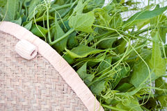 Fresh chayote vines in basket Stock Photo