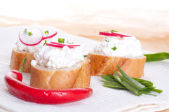 Fresh cheese with agarden radish. Fresh cheese with a garden radish cream Royalty Free Stock Photography