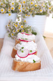 Fresh cheese with agarden radish Stock Images