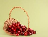 Fresh cherries Stock Images