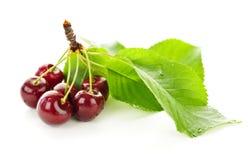 Free Fresh Cherries Royalty Free Stock Image - 15794446