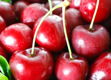 Free Fresh Cherries Royalty Free Stock Image - 19909796